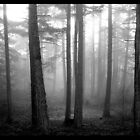 Mountain Forest by Arberndt