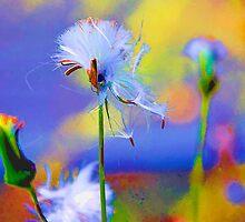 Fluff by DeerPhotoArts