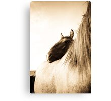 Sorraia Filly and Mare Canvas Print