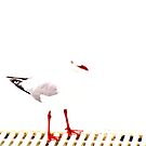 Study of Bird Vol. 1 to 12 by Glenn Browning