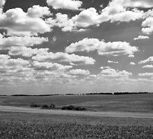 Ukrainian fields #2 by Tutelarix