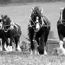 Heavy Horses at work by Caroline Anderson