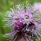 Purple Australian Bush Bloom by Bindi Hatcher