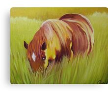 Horse eating in  tall grass. Canvas Print