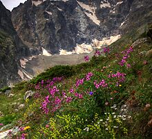 Summer in the high Alps by Aidan Semmens