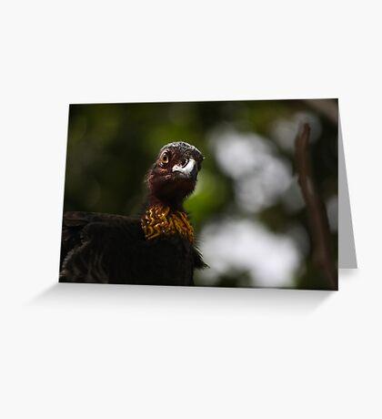 Who you callin' a turkey? Greeting Card