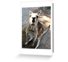 Kangaroo Smile Greeting Card