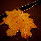 My Fallen Leaf....Enlightened... by Larry Llewellyn