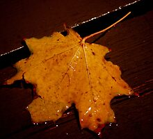 My Fallen Leaf....Enlightened... by Larry Llewellyn