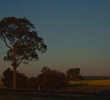 Fields at Dusk by Greg Wilson