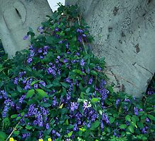 Native Wisteria (Happy Wanderer) by Elaine Teague