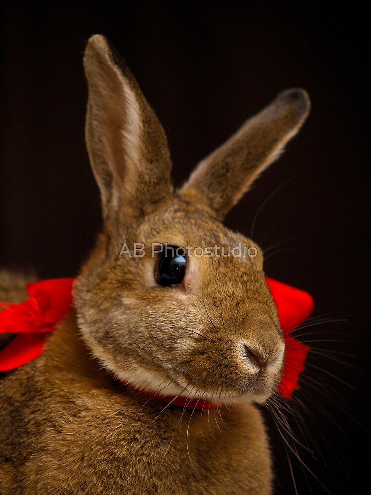 Christmas bunny by Arve Bettum