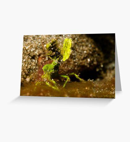 Underwater green leaf monster Greeting Card