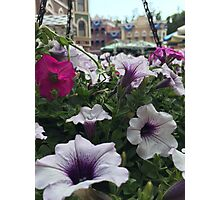 Main Street Blooms Photographic Print