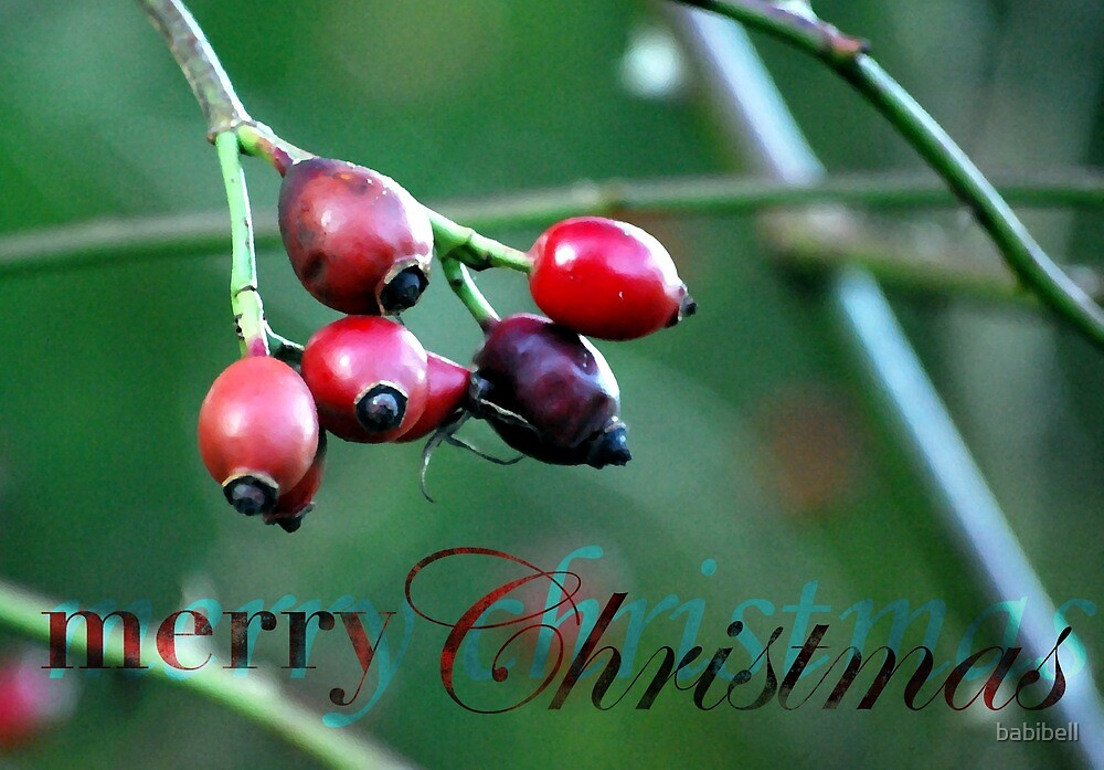 Berries Christmas Card by Claire Dimond