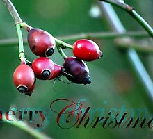 Berries Christmas Card by Claire Elford