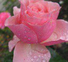 Seeking the Sun Rose by MarianBendeth