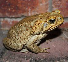 Evil Cane Toad Australia by Emma Delladio
