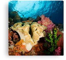 Reef Colours Canvas Print