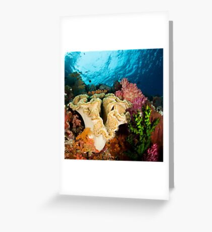 Reef Colours Greeting Card