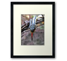 I Can See You Just fine, But How Do You Taste? Framed Print