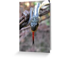 I Can See You Just fine, But How Do You Taste? Greeting Card
