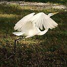 Bird in Flight by Sara Wood