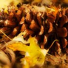 Simplicity In The Fall by Trudy Wilkerson