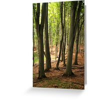 Big trees ahead. Greeting Card