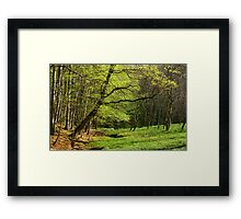 Spring glade. Framed Print