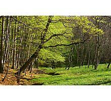 Spring glade. Photographic Print