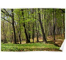 Spring glade with trees. Poster