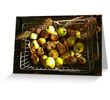 Rotten autumn apples. Greeting Card