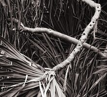 Pandanus abstract by Yves Rubin