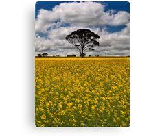 Fields of Gold - Western Australia Canvas Print