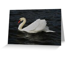 A swan in movement Greeting Card