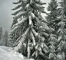 Vintage Winter. by demigod