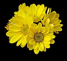 yellow dark flowers by Rodney55