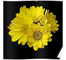 yellow dark flowers Poster
