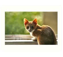 Red haired cat surprised. Art Print