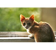 Red haired cat surprised. Photographic Print