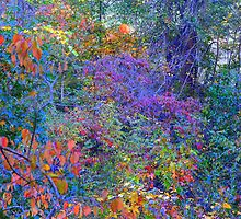 Fall Colors in Natchez, MS by wolfepaw
