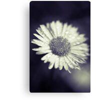 I heart daisies Canvas Print