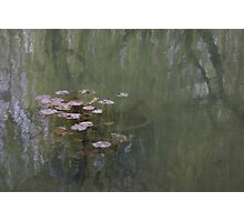 Waterlillies (Monet's Garden) Photographic Print