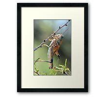 Grasshopper, PLAINS LUBBER Framed Print