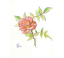 A Rose in Brigadoon Photographic Print