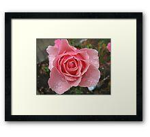 Pink Sprinkles  Rose Framed Print