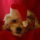 IS IT CHRISTMAS ALREADY??? by Helen Akerstrom Photography