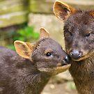 Kissing deer by evilcat