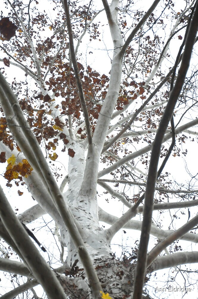 The White Tree of Gondor by Ann Eldridge